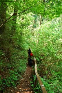 丹沢―高取山・仏果山ハイキングコース(4)