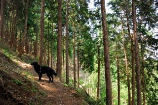 丹沢―高取山・仏果山ハイキングコース(7)