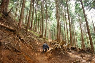 丹沢―高取山・仏果山ハイキングコース(9)
