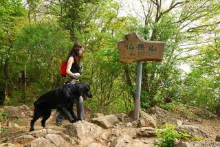 丹沢―高取山・仏果山ハイキングコース(21)