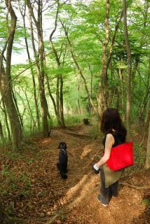 丹沢―高取山・仏果山ハイキングコース(24)