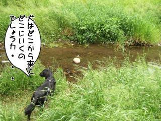 公園はしご~野川公園、武蔵野の森公園~(4)