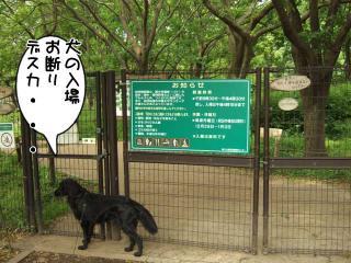公園はしご~野川公園、武蔵野の森公園~(6)