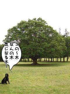 公園はしご~野川公園、武蔵野の森公園~(8)