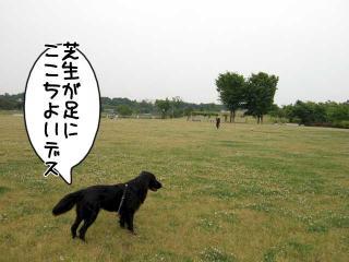 公園はしご~野川公園、武蔵野の森公園~(10)