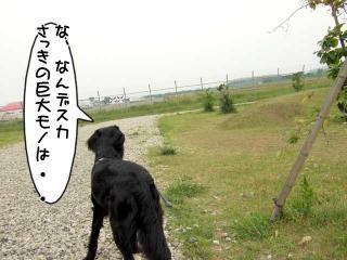 公園はしご~野川公園、武蔵野の森公園~(14)