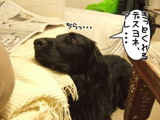 ルーアくんの思い(3)