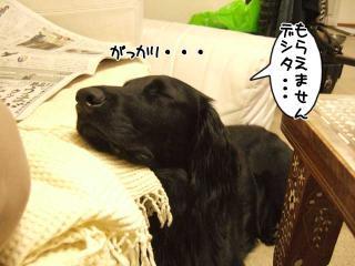 ルーアくんの思い(5)