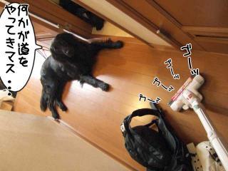 ルーアくんと掃除機(1)