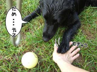 ボール・・・(2)