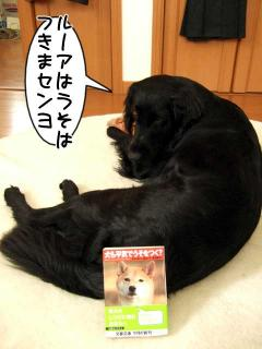 犬本紹介その36-「犬も平気でうそをつく?」(1)