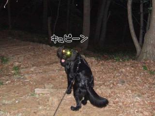 光る眼(1)