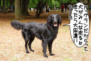 代々木公園ドッグラン(2)