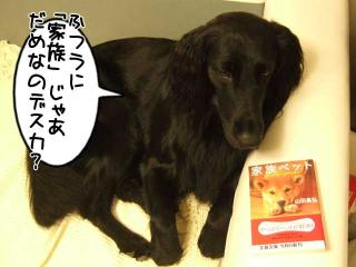 犬本紹介その38-「家族ペット」(1)