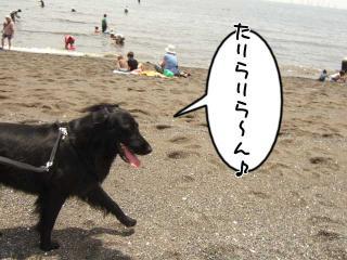 日曜日は宝くんとドッグラン・・・♪(10)