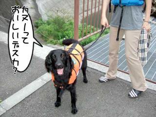 カヌー犬へ道っ!(5)