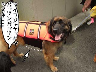 カヌー犬へ道っ!(7)