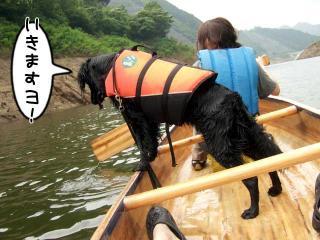 カヌー犬へ道っ!(17)