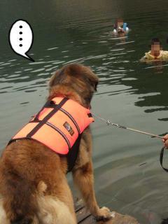 カヌー犬へ道っ!(10)