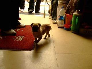 天津的犬事情(1)