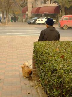 天津的犬事情(2)
