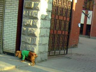 天津的犬事情(3)
