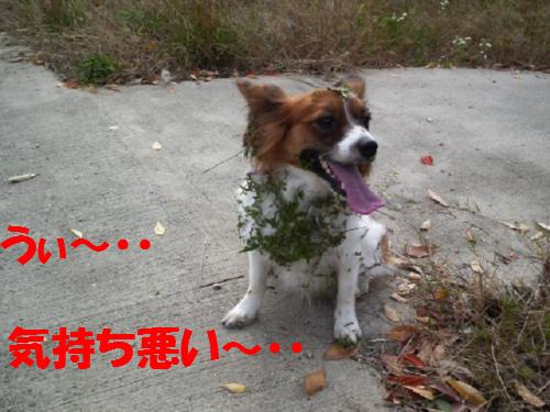 草の種まみれ