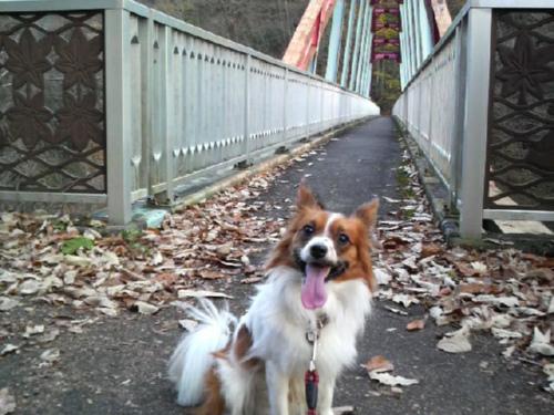 林道上の橋にて。
