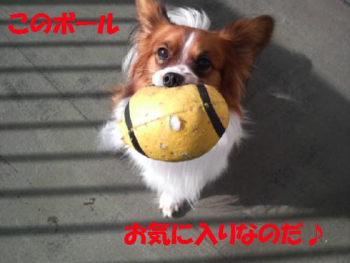 ベランダ・ボール