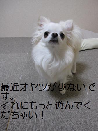 IMG_2272.jpg