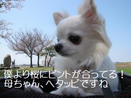 IMG_2694.jpg