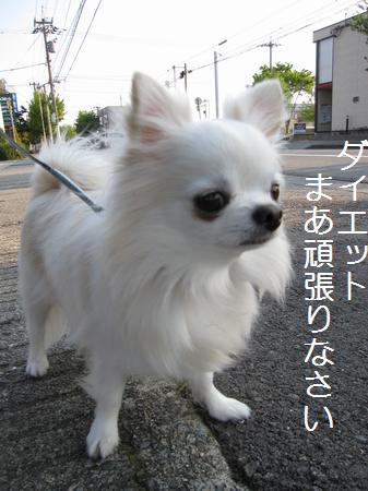 IMG_3095.jpg