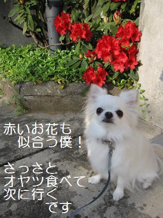 IMG_3199.jpg
