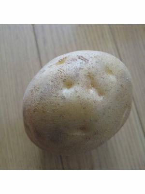 potato1_convert_20080918135823.jpg