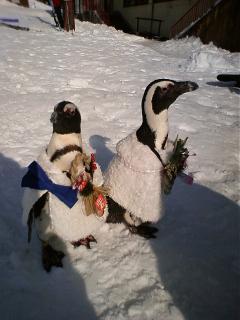 ペンギンデー