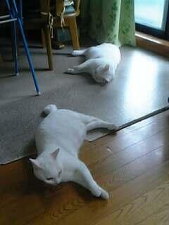 050613_064808yukimiyu.jpg