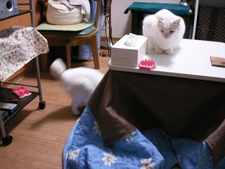PICT0007yukimiyu04024.jpg