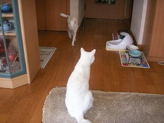 PICT0008yukimiyu0705204.jpg