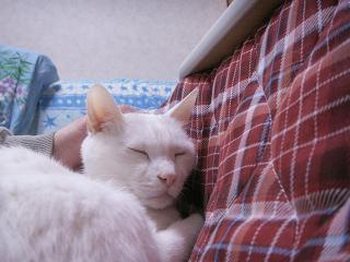 PICT0009yuki0701145.jpg