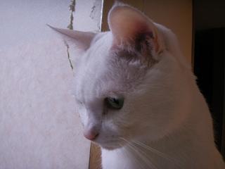PICT0016yuki02257.jpg