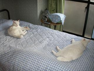 PICT0025yukimiyu05211.jpg