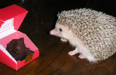 チョコレート 紅