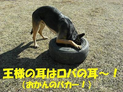 CIMG0448_sh01.jpg