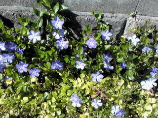 駐車場の片隅に咲いてた花♪