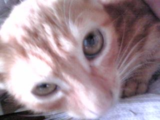 実家の猫♪