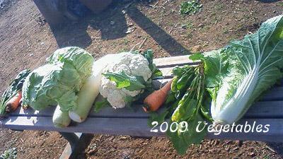 2009 野菜収穫