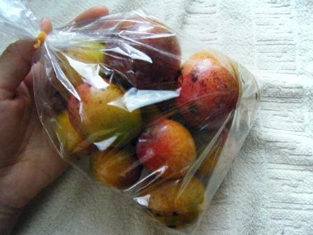 ちびマンゴー