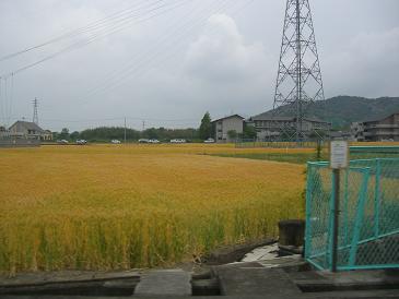 2009.5.5.香川うどんツアー14