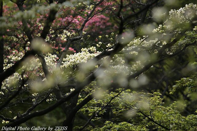 IMG_060427_03.jpg