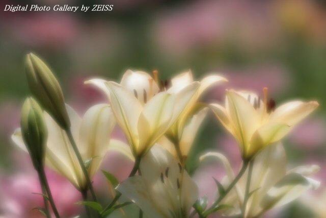 IMG_060807_03.jpg
